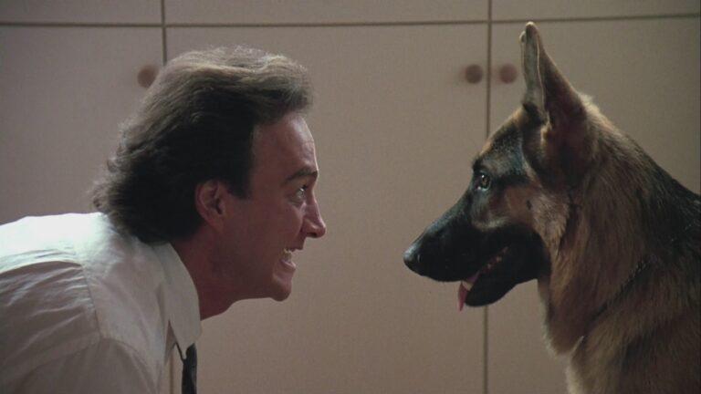 Chili und Billiardkugeln mag Drogenhund Jerry mit der kalten Schnauze